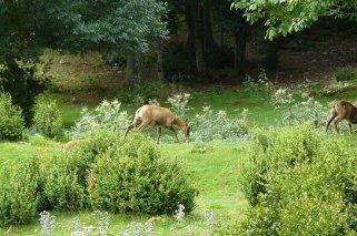 Lacuniacha: Parque Natural en Huesca