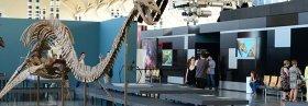 """""""Els nostres dinosaures"""": Exposición familiar en Valencia"""