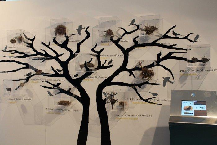 Museo de Ciencias Naturales de Valencia: Aprender de forma divertida